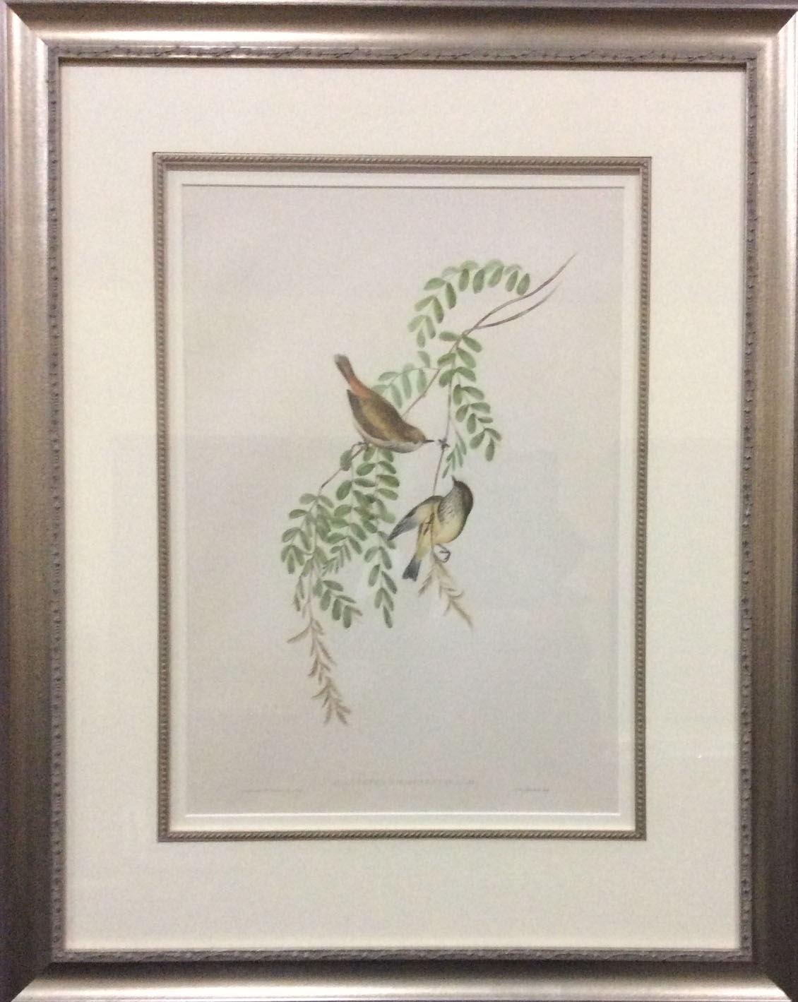 John gould paintings for sale for Artworks for sale online